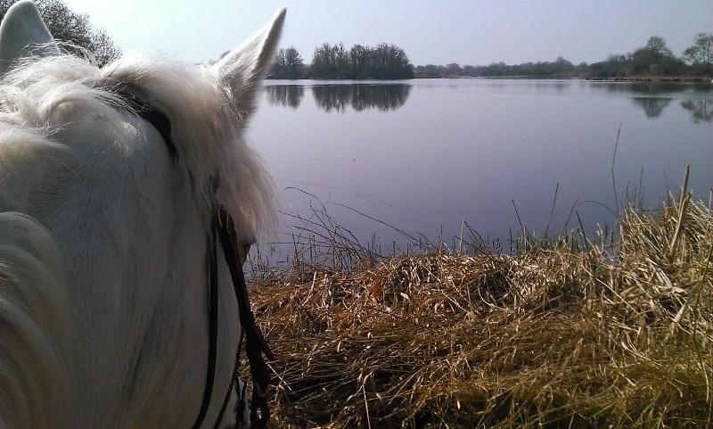 activites_cheval_rosnay_bois retrait_vue etang poney © A. AUDOUIN